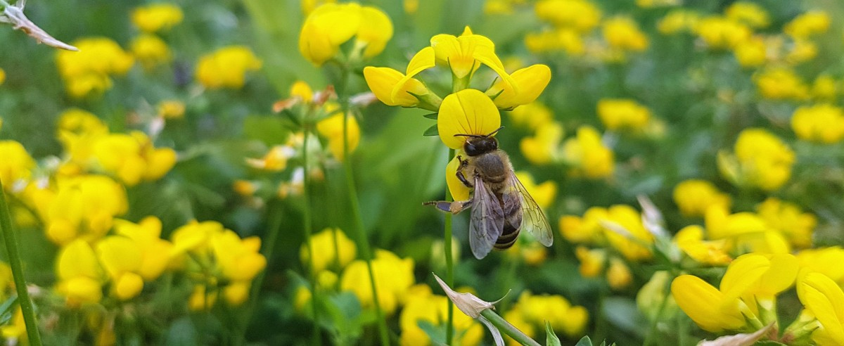 An interview with Pollinator PartnershipCanada