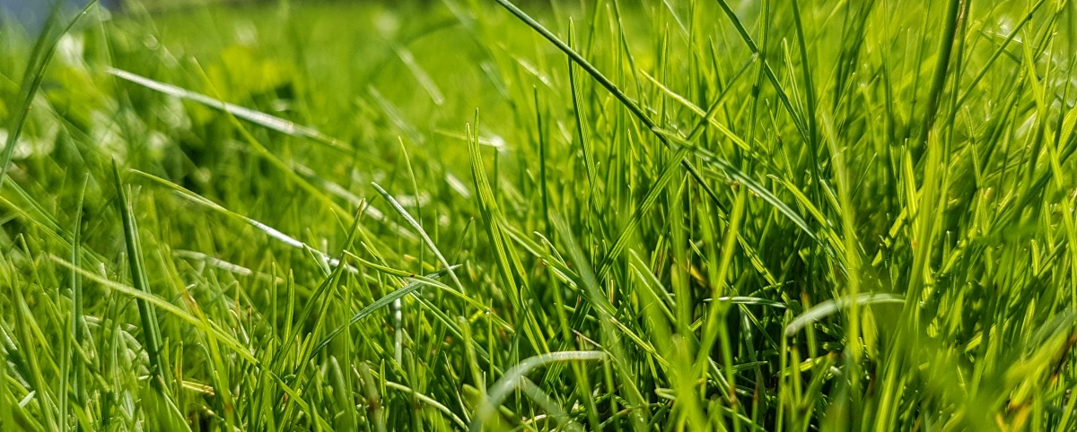 Why pesticides don't mean a healthylawn